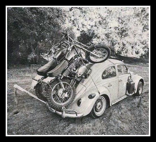 Poor bug !